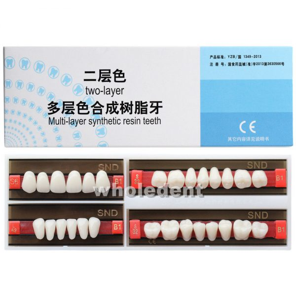 TWO-LAYER SYNTHETIC RESIN TEETH A1 (MEDIUM)